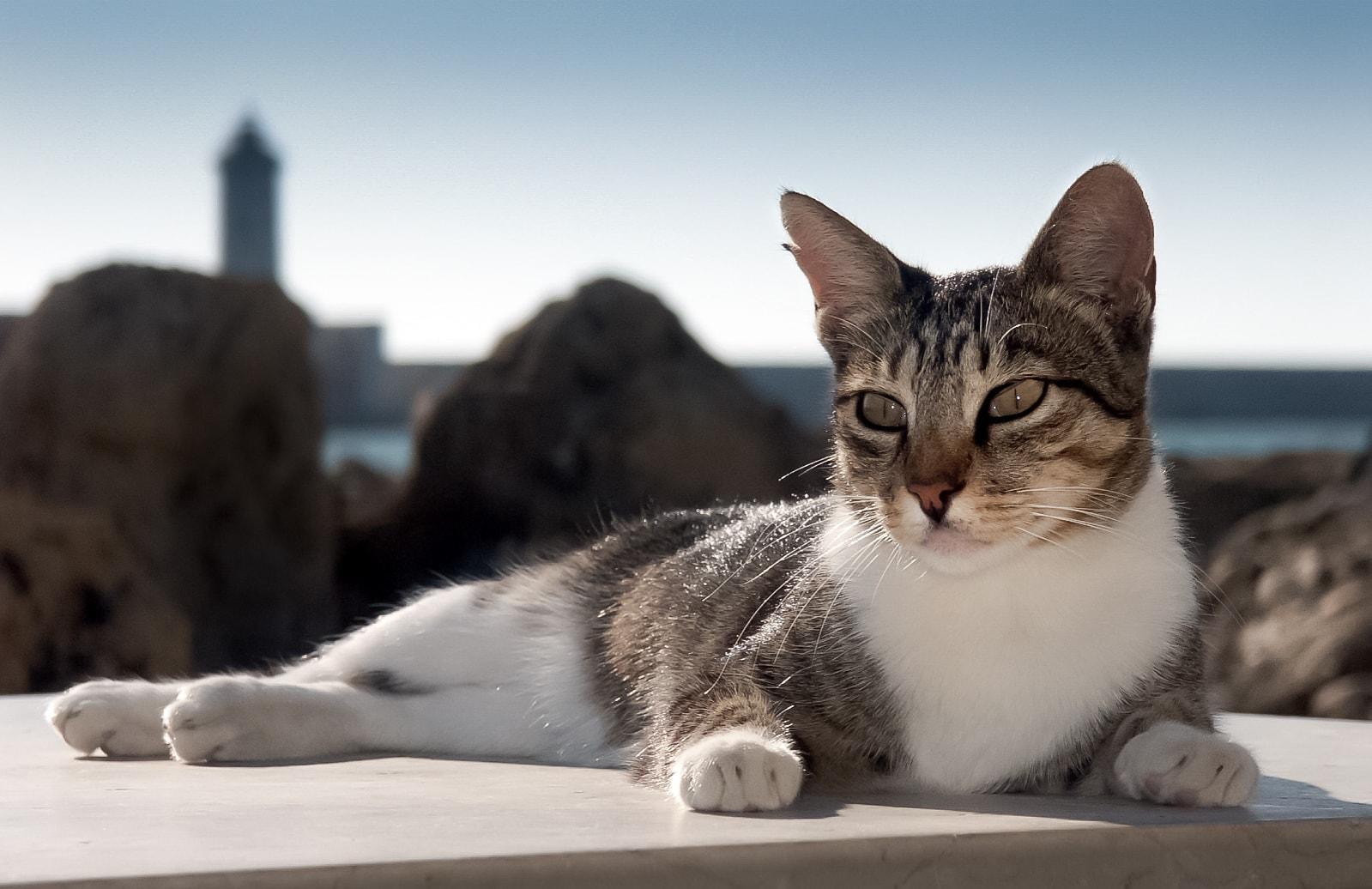 Ritratto di gatto al porto di Livorno